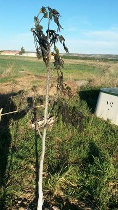 Melgar de Yuso (Palencia)