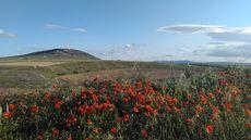 Jaray, Soria