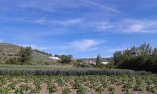 Páramo del Arroyo (Burgos)