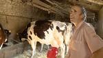 Los ganaderos afectados por el cierre de Lauki ya buscan otros nichos de mercado