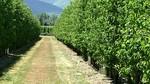 UCCL denuncia que la sequía afecta al 60% de los cultivos y las heladas al 40% del viñedo por lo que exige la declaración de zona catastrófica