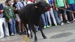Pacma emprender� acciones legales contra el Toro Enmaromado y el Torito de Alba