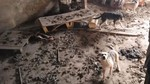 Rescatan a 16 perros en condiciones de salud e higiene deplorables en una vivienda tras un desahucio judicial en Roda de Eresma (Segovia)