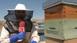 Los apicultores de Castilla y Le�n culpan a los pesticidas de la baja producci�n de miel