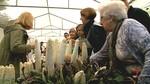 Tudela de Duero celebra su tradicional Feria del Espárrago