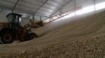Buenas previsiones para la cosecha de cereal en Castilla y León