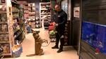 Así es la jubilación de un perro policía