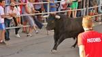 El tercer encierro de las fiestas de Cu�llar, Segovia, concluye sin incidentes y con todos los novillos en el recorrido urbano