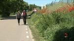 El tramo del Camino de Santiago que transcurre por Castrojeriz, Burgos, desaparecido bajo la maleza