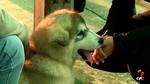 M�s de 500 perros de 150 razas diferentes se exhiben en Le�n en el Concurso Canino Internacional