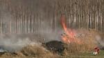 Agricultores e ingenieros de montes critican la quema de rastrojos por ser 'restrictivas e inseguras'
