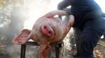 Multa de 3.600 euros a una asociación de Ávila por no respetar la norma en una matanza de cerdo