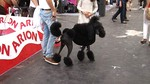 100x100 Mascota vuelve a Madrid