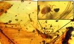 Descubiertas las garrapatas que amargaron la vida a los dinosaurios