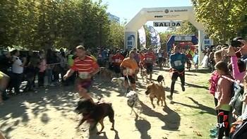 Valladolid acoge la primera prueba del circuito Canicross Series