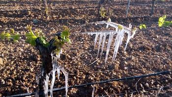 Constituida la unidad de análisis de los cultivos afectados por la sequía y las heladas