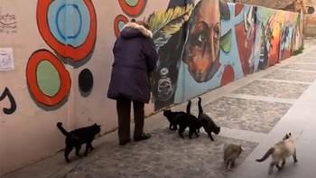 Soria 'okupada' por cientos de gatos