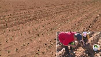 Nuevos agricultores para la industria transformadora del Pimiento de El Bierzo