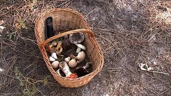 Llenar la cesta de setas, una tarea complicada este otoño