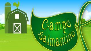 Campo salmantino