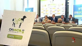 Zamora será la sede de la I Feria Internacional del Ovino 'Ovinnova'