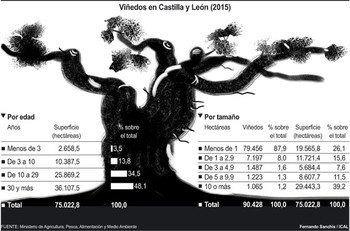 Vinos estructurados y con aromas intensos: Casi la mitad de las viñas de Castilla y León tienen 30 o más años