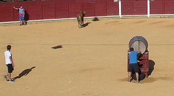 El vino y los toros unidos en Toro, Zamora