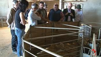 Expertos comunitarios visitan una de las explotaciones atacadas por lobos en Zamora