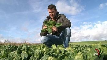 Espinacas, cultivo alternativo al cereal en Ávila