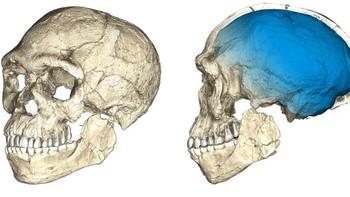 Hallan en Marruecos los restos de los primeros 'Homo Sapiens'