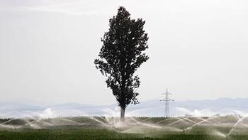El sector de la remolacha confía en una mayor producción por el aumento de 2.500 hectáreas sembradas