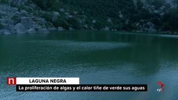 La presencia de algas motiva la tonalidad verdosa en las aguas de la Laguna Negra de Soria