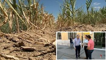 Los regantes de Valladolid dependen de la Comunidad del Canal de Almazán para salvar sus cosechas