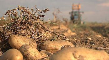 Las OPAS piden un equilibrio en los precios de la patata