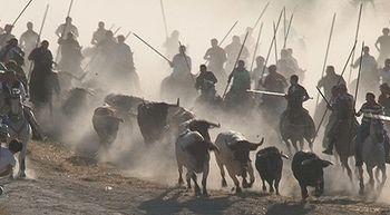 El tercer encierro de Cu�llar, Segovia, transcurre r�pido y sin incidentes