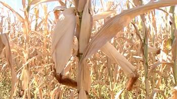 Los cultivos del Bajo Duero 'agonizan' por la escasez de agua
