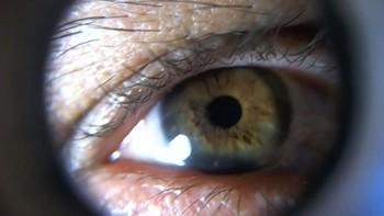 Científicos de la Usal estudian cómo aplicar a los humanos la capacidad de regeneración visual del pez cebra