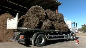El Céder de Lubia y Agresta lideran un proyecto piloto para obtener fungicidas naturales para uso en la agricultura ecológica