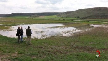 Los agricultores de Alcubilla de las Peñas, Soria, dan por perdida la cosecha de sus campos anegados