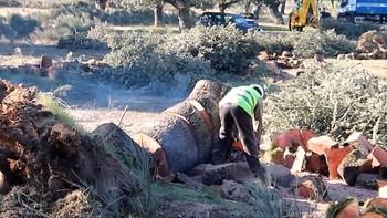 Un juzgado paraliza la tala de encinas en el término municipal de Retortillo, Salamanca