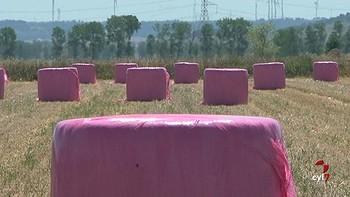 Palencia ensila en rosa para concienciar contra el c�ncer