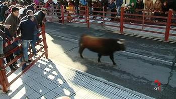 Segundo encierro del Carnavales del Toro de Ciudad Rodrigo rápido y limpio