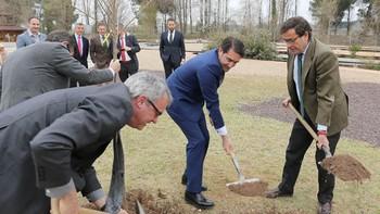 A cada castellano y leonés nos 'pertenecen' 1.280 árboles