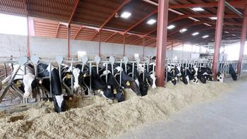 La crisis del sector lácteo obliga a la mitad de los ganaderos de León a reorientar su negocio