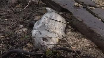 La CHD analiza las aguas del embalse de Almendra tras encontrarse decenas de peces muertos