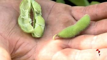 Castilla y León genera un tercio de la soja que se produce en España