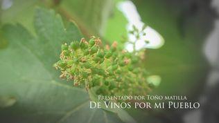 De vinos por mi pueblo