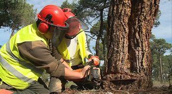 As� se forman los futuros agentes forestales de Castilla y Le�n