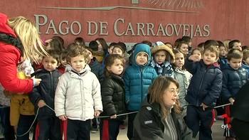 Escolares de entre 3 y 5 años aprenden a hacer vino en  Pago de Carraovejas
