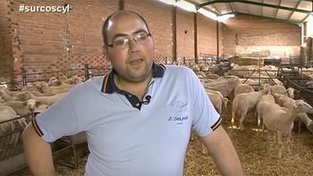 Alfonso apuesta por el sector de ovino de leche
